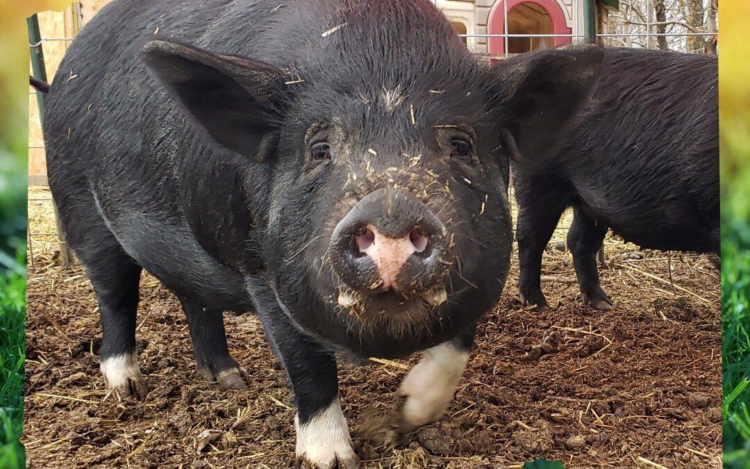 Jennifer (Willeyville Farm)