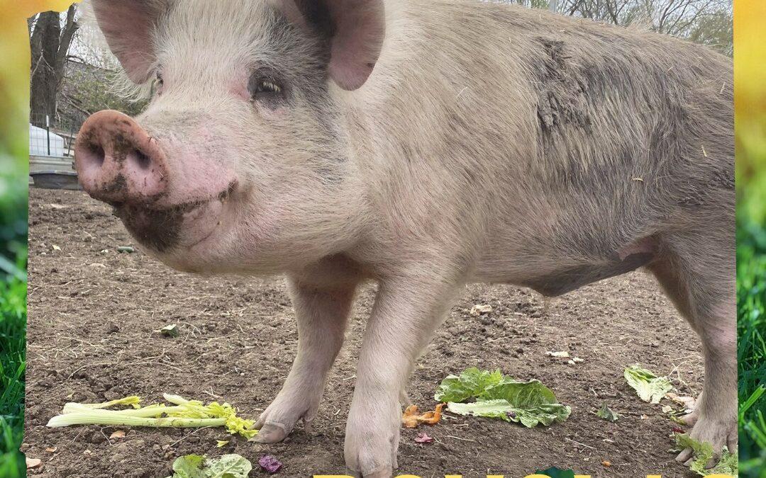 Douglas (Willeyville Farm)